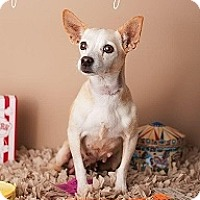 Adopt A Pet :: Proud Mary - Mesa, AZ