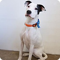 Adopt A Pet :: jarvis - Midvale, UT