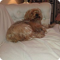 Adopt A Pet :: Matt - Lorain, OH