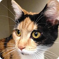Adopt A Pet :: ANYA - Pittsburgh, PA