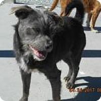 Adopt A Pet :: Bueller - Hartford, KY