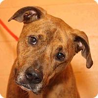 Adopt A Pet :: Momo **FOSTER NEEDED** - Joliet, IL