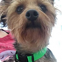 Adopt A Pet :: Perez - Boston, MA
