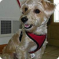 Adopt A Pet :: Sadie - South Amboy, NJ