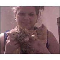 Adopt A Pet :: 4 Kittens Orange & Tiger - Alliance, OH