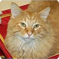 Adopt A Pet :: Hankie - Racine, WI