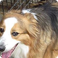 Adopt A Pet :: Bandit - Richfield, OH