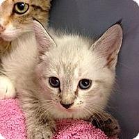 Adopt A Pet :: Rose - Fort Lauderdale, FL
