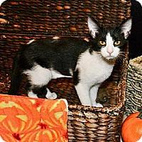 Adopt A Pet :: Squirt *REDUCED FEE* - San Diego, CA
