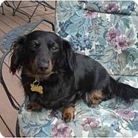 Adopt A Pet :: Duchess 2208 - San Jose, CA