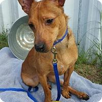 Adopt A Pet :: Austin - Ft. Collins, CO