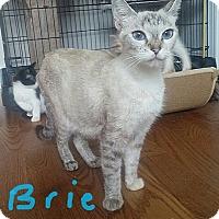Adopt A Pet :: Brie - McDonough, GA