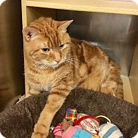 Adopt A Pet :: PJ-Adoption Pending! - Colmar, PA
