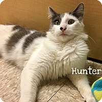 Adopt A Pet :: Hunter - Foothill Ranch, CA