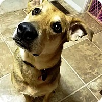 Adopt A Pet :: BANDO- Emotional Support Animal - DeLand, FL