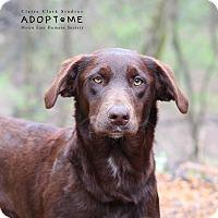 Adopt A Pet :: Samoa - Edwardsville, IL