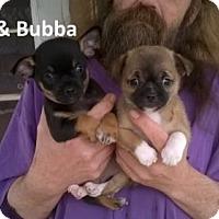 Adopt A Pet :: Bubba - N. Babylon, NY