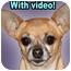 Photo 1 - Chihuahua Mix Dog for adoption in Dallas, Texas - Mimi