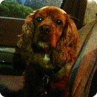 Adopt A Pet :: TAFFY - Tacoma, WA