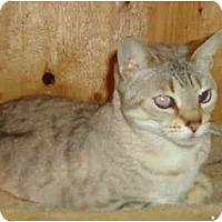 Adopt A Pet :: Pandora - Elmira, ON