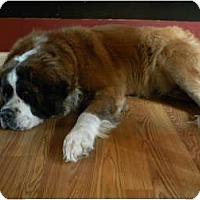Adopt A Pet :: Carly - Cincinnati, OH