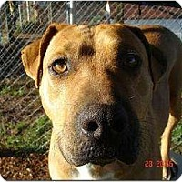 Adopt A Pet :: Sugar - Plainfield, CT