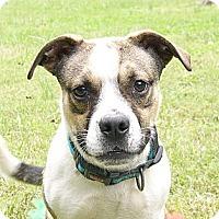 Adopt A Pet :: Aiden - Mocksville, NC