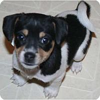 Adopt A Pet :: Asia - Westfield, IN