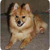Adopt A Pet :: Hastings - Chesapeake, VA