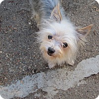 Adopt A Pet :: Maddie - Los Angeles, CA