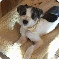 Adopt A Pet :: Diesel - Homer Glen, IL