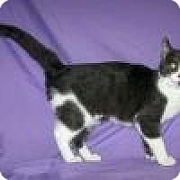 Adopt A Pet :: Olivia - Powell, OH