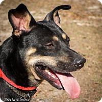 Adopt A Pet :: Prince - Daleville, AL