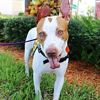 Adopt A Pet :: Baylee - Ft. Myers, FL