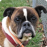Adopt A Pet :: Rambo - Germantown, MD