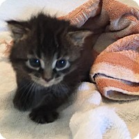 Adopt A Pet :: Emmett - Melbourne, FL