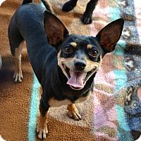 Adopt A Pet :: Rosalee - Phoenix, AZ