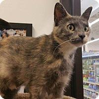 Adopt A Pet :: Stella - Chaska, MN