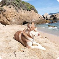 Adopt A Pet :: Eski - Campbell, CA