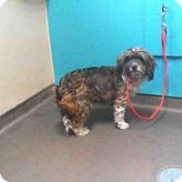 Adopt A Pet :: *SYLVIA - Las Vegas, NV
