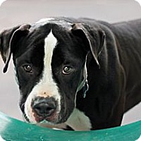 Adopt A Pet :: Titus - Port Washington, NY