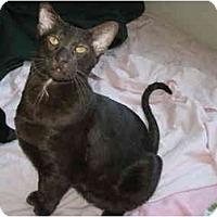 Adopt A Pet :: Chuckie - Beverly Hills, CA