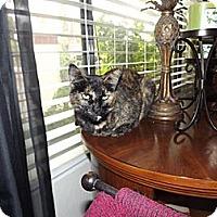 Adopt A Pet :: Spice - Laguna Woods, CA