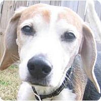 Adopt A Pet :: Darius PENDING - Indianapolis, IN