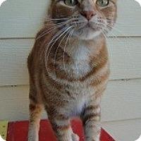 Adopt A Pet :: BURNEY - Crescent City, CA