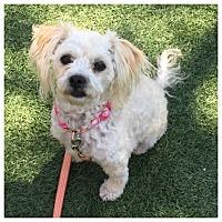 Adopt A Pet :: Emmie - West LA, CA