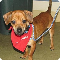 Adopt A Pet :: Charlie - North Olmsted, OH