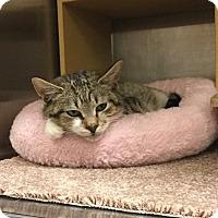 Adopt A Pet :: Max-Adoption Pending! - Colmar, PA