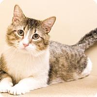 Adopt A Pet :: Robert - Chicago, IL