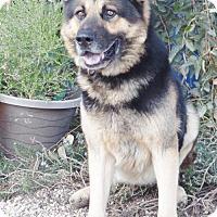 Adopt A Pet :: Captain - San Diego, CA